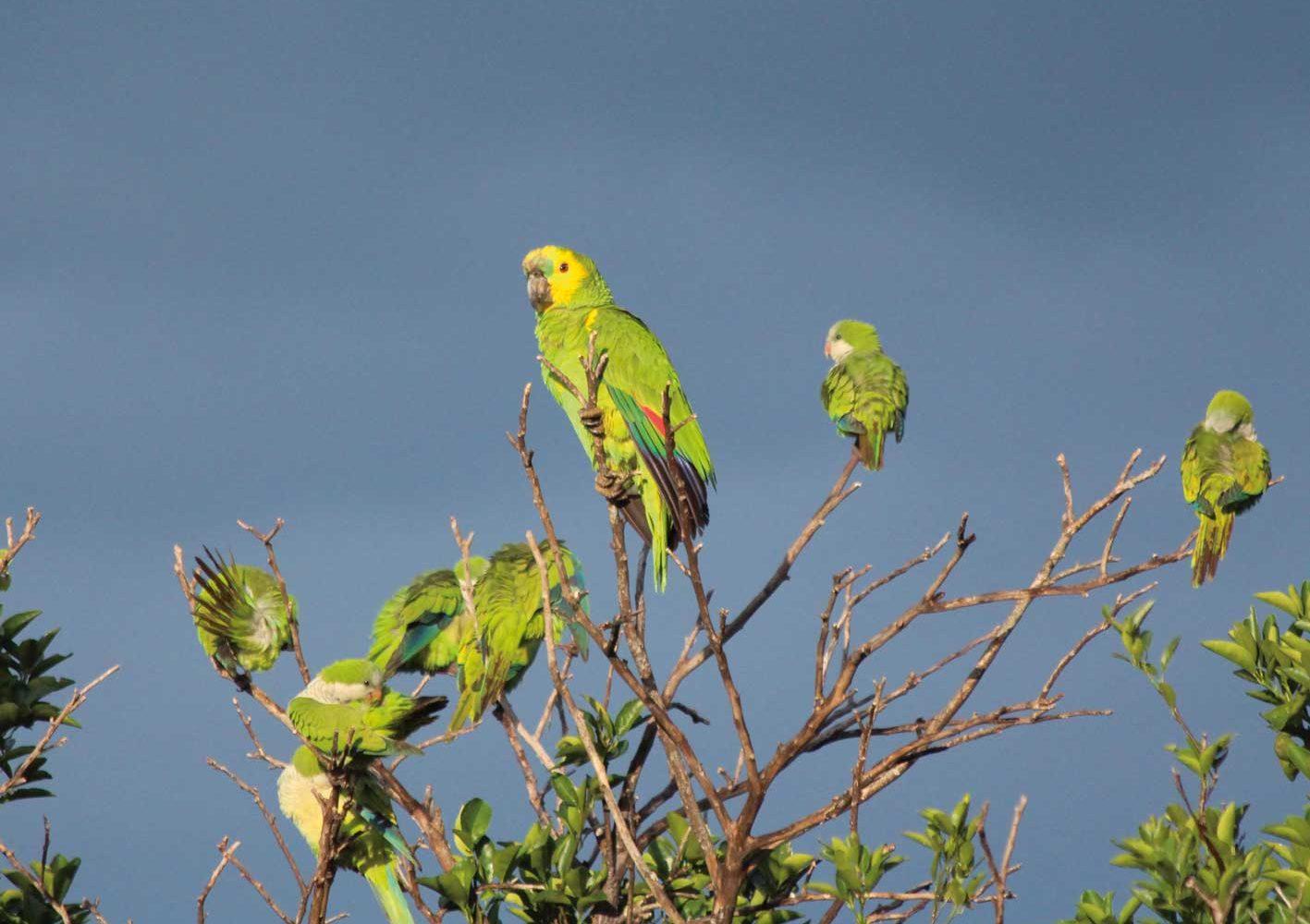 Reiche Tierwelt im Pantanal, Brasilien