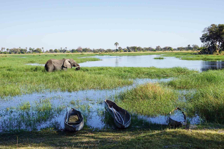 Eindrückliches Okawango-Delta, Botswana