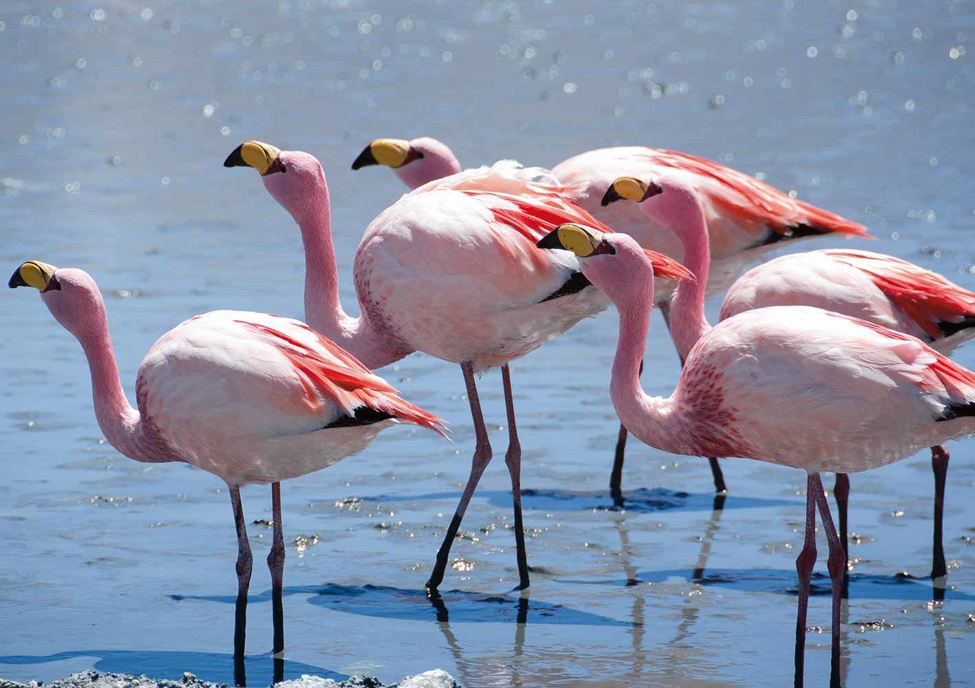 Sie sehen Lagunen mit Flamingos
