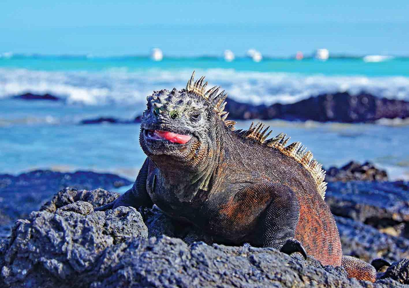 Der Tierwelt auf Galápagos hautnah begegnen.
