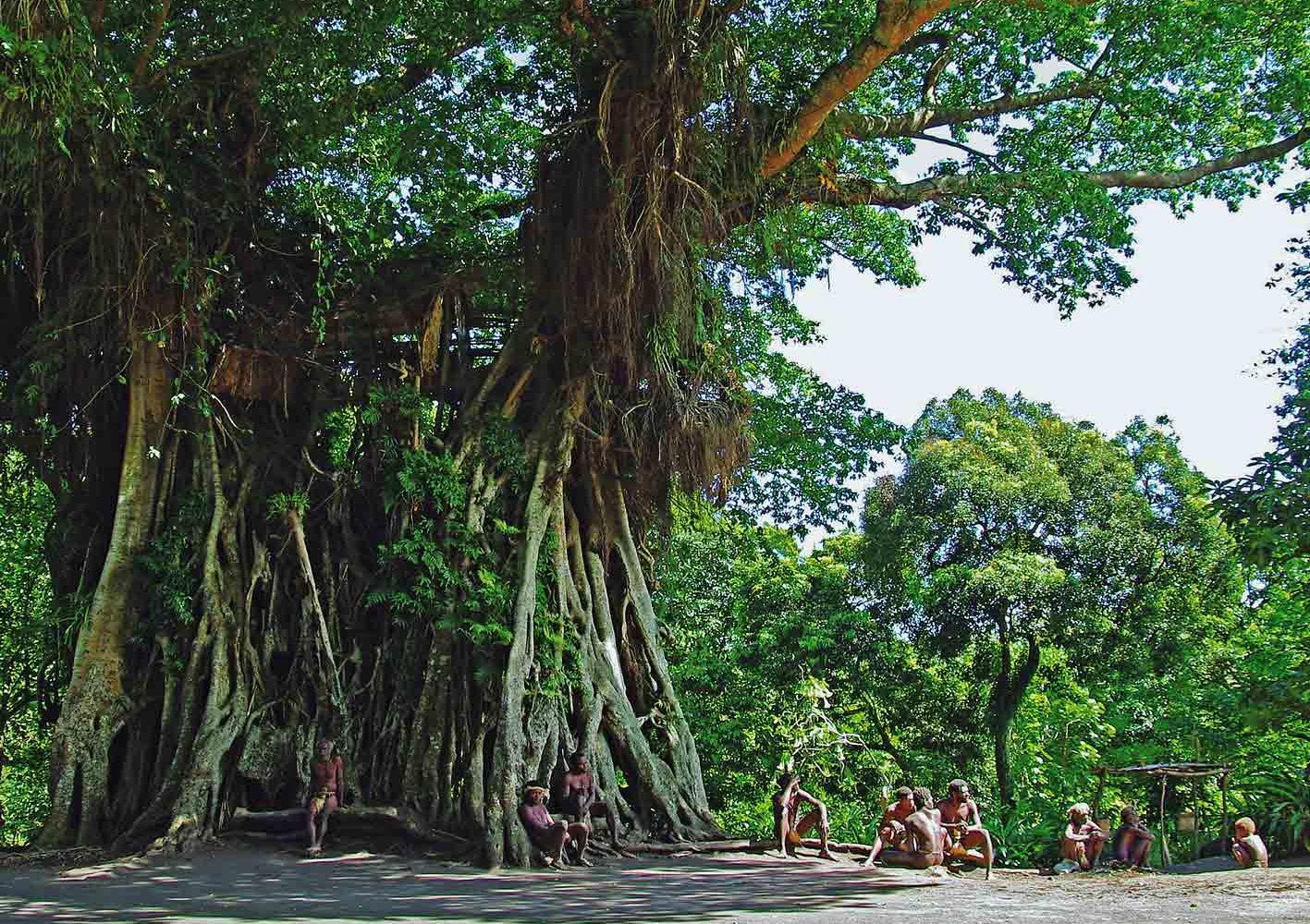 Im Schaten des Banyan Trees bei den Nambas auf Vanuatu