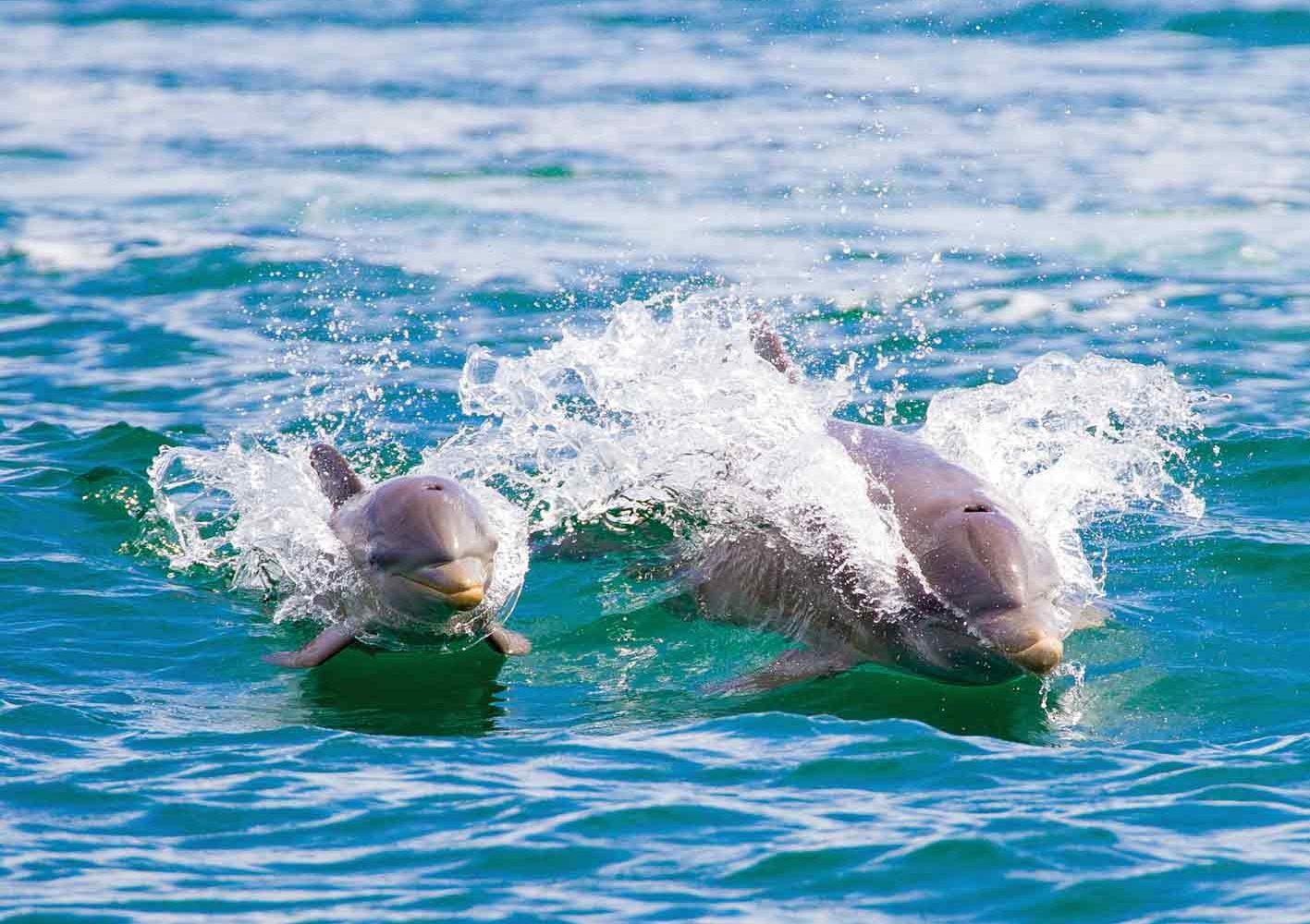 Delfine bei Bocas del Toro