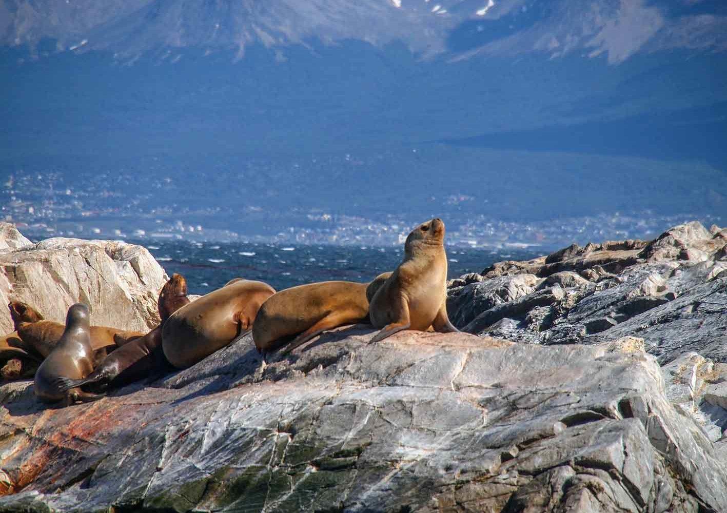 Seelöwen im Beagle-Kanal bei Ushuaia