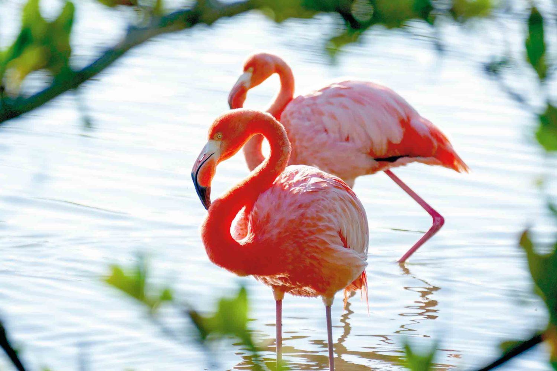 Flamingos auf Galápagos, Ecuador