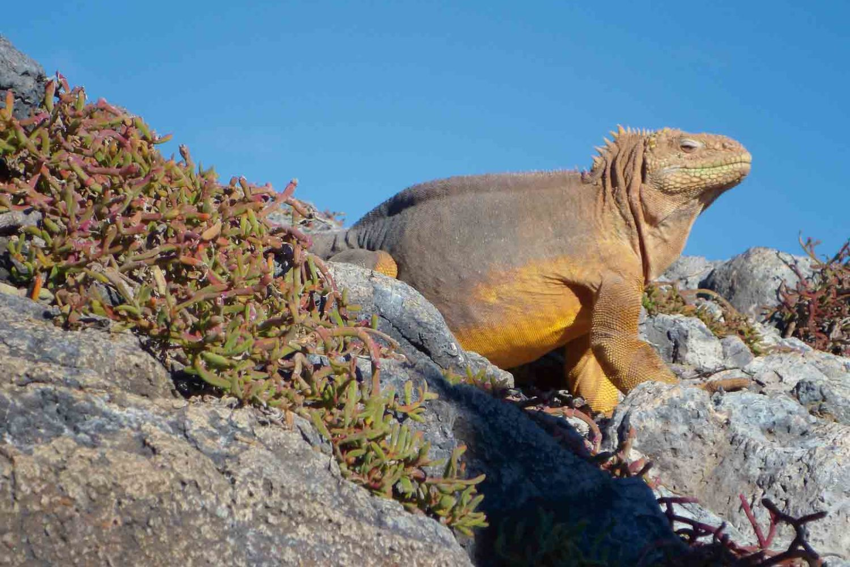 Eindrückliche Tierwelt auf Galápagos, Ecuador