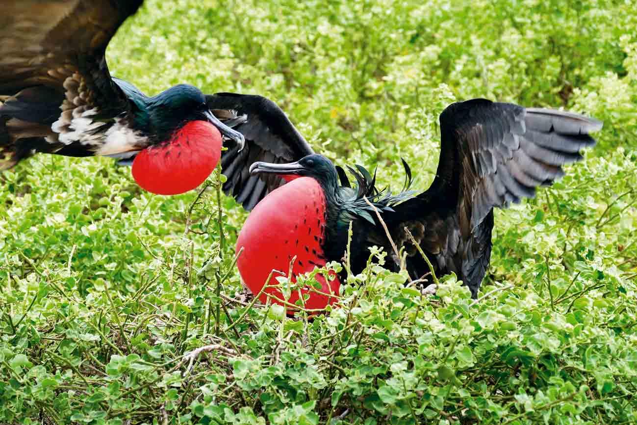Ecuador: Auf Galápagos die Tierwelt hautnah erleben.
