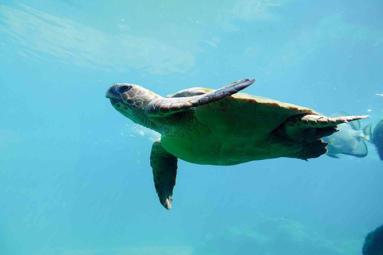 Faszinierende Unterwasserwelt bei La Réunion