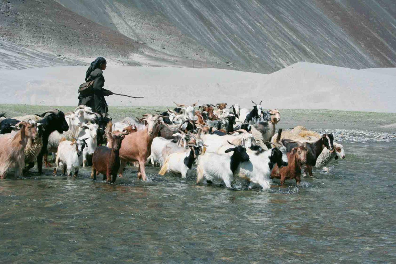 Begegnung mit einer Hirtin im Nubra-Tal, Ladakh