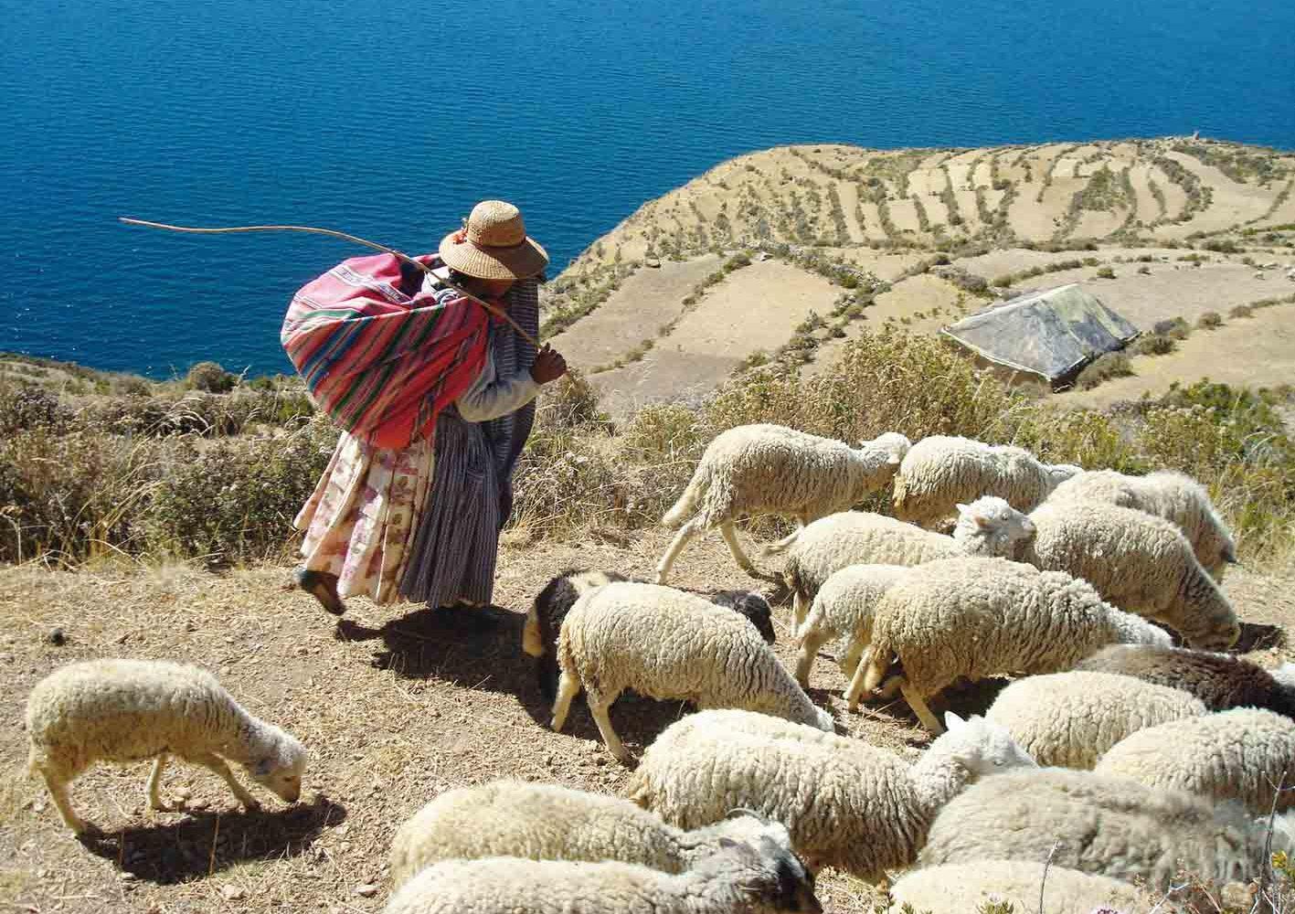 Mädchen mit ihrer Schafherde am Titicaca-See, Bolivien