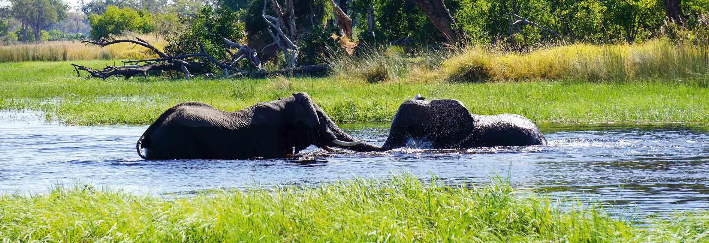 Spielende Elefanten im Okawango-Delta