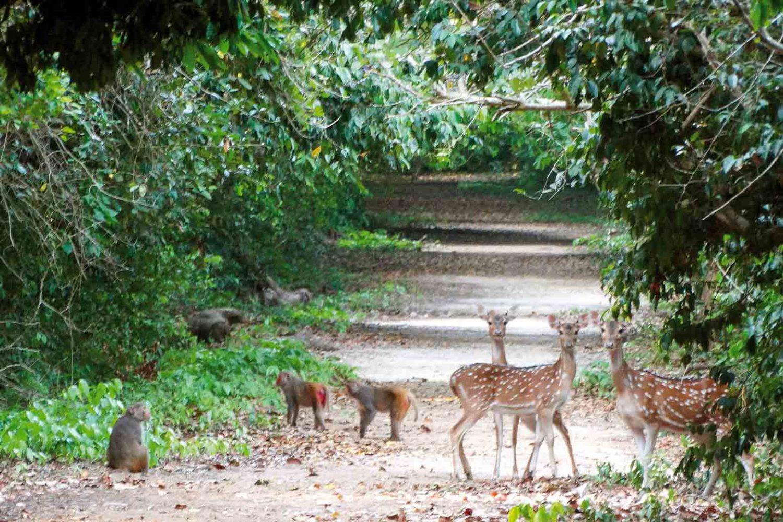 Tiere der Sundarbans: Axis-Hirsche und Rhesusaffen, Indien