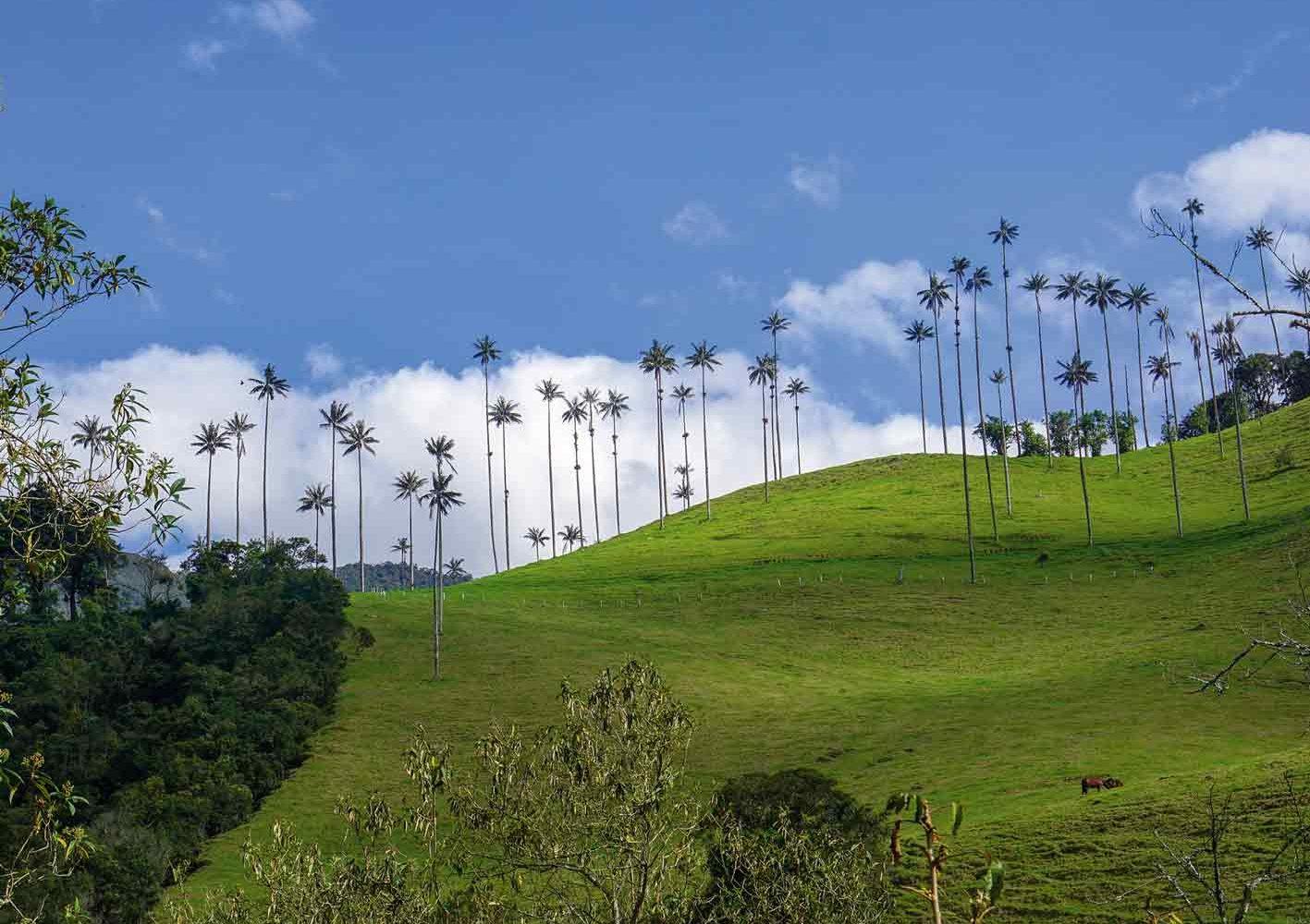 Wir wandern bei den Wachspalmen im Valle de Cocora, Kolumbien