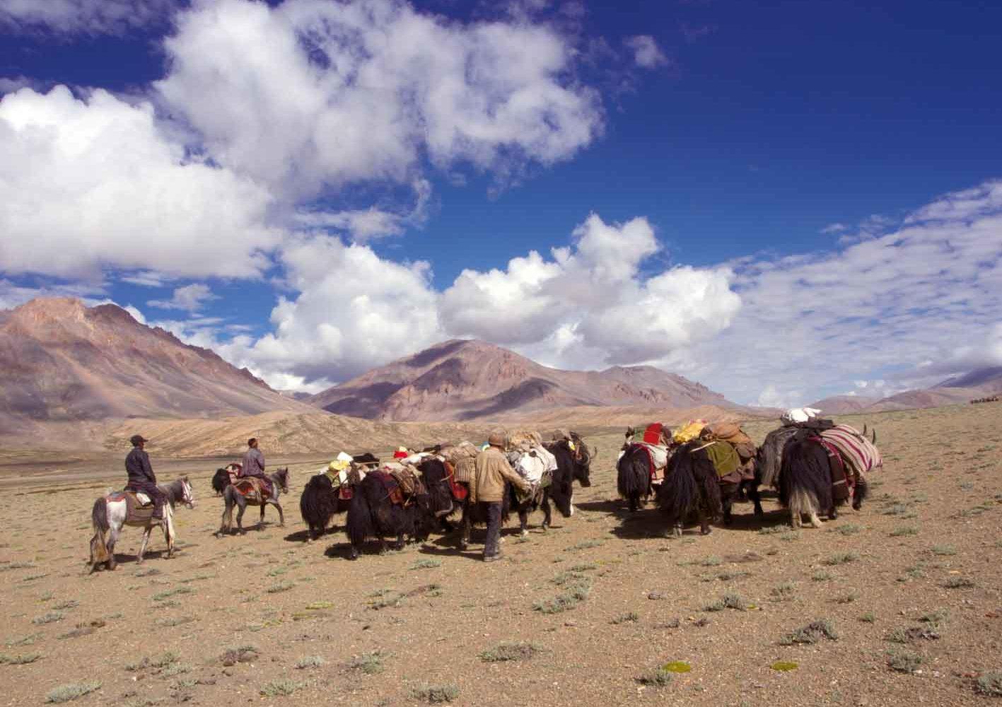 Ladakh: Auf der Hochebene begegnen wir Nomaden mit ihren Herden.