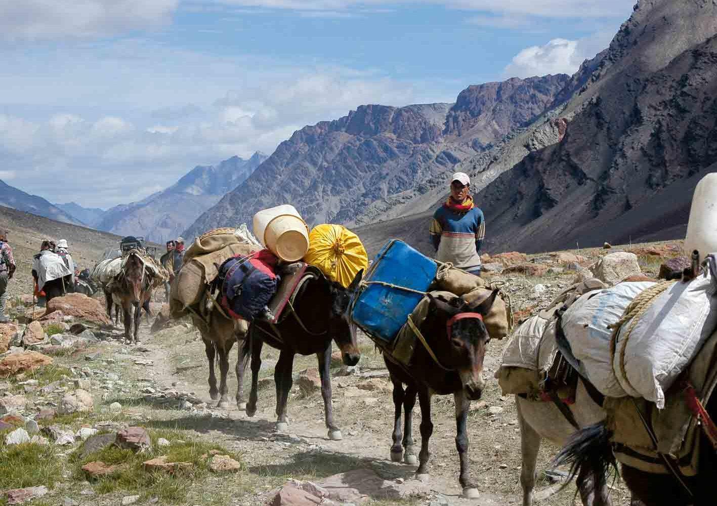 Ladakh: Tragtiere transportieren unser Trekking-Gepäck.