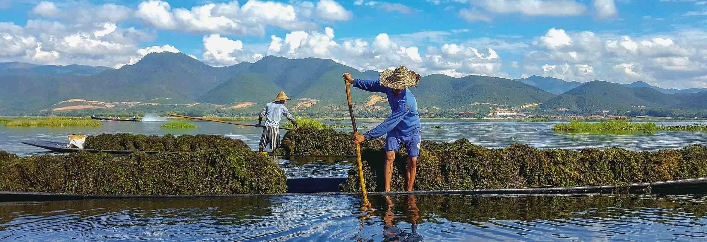 Gewinnung von Seegras für schwimmende Gärten im Inle-See
