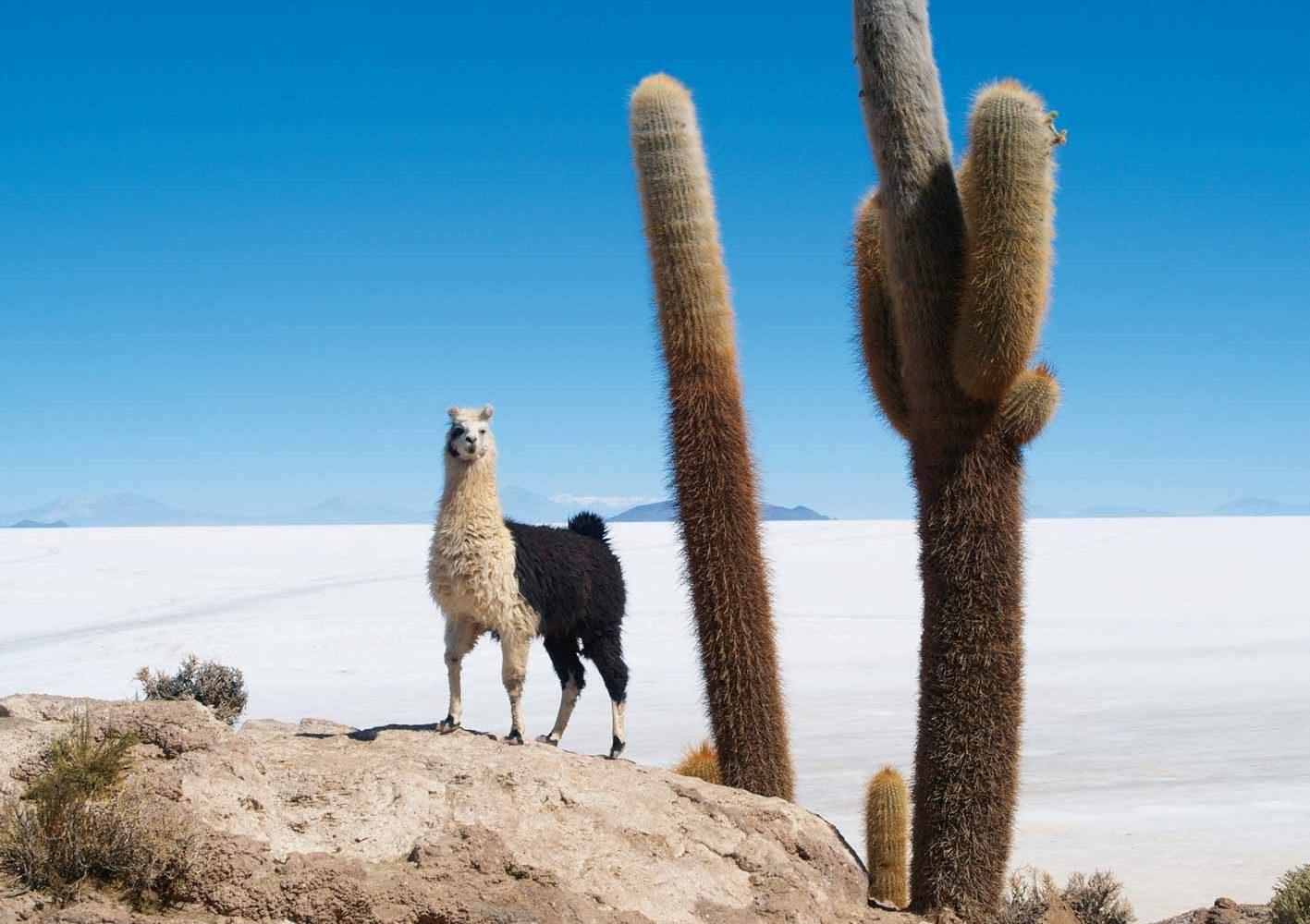 Auf einer Insel im Salzsee Salar de Uyuni, Bolivien
