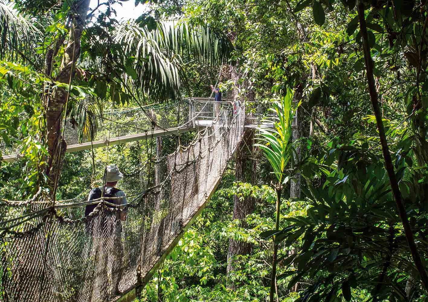 Guyana: Auf dem Canopy Walkway den Urwald aus einer anderen Perspektive erleben.