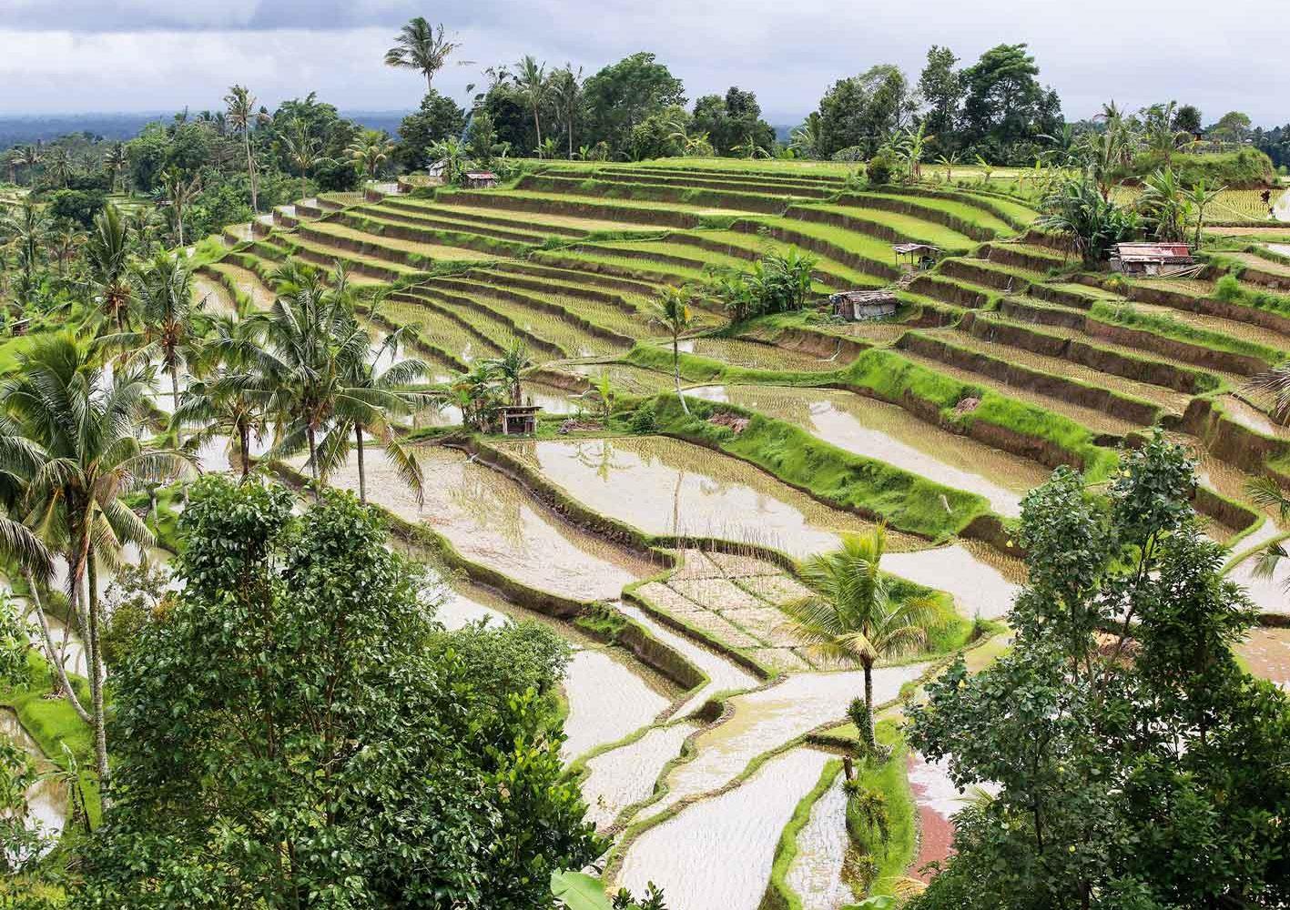 Wanderung entlang von Reisfeldern auf Bali, Indonesien