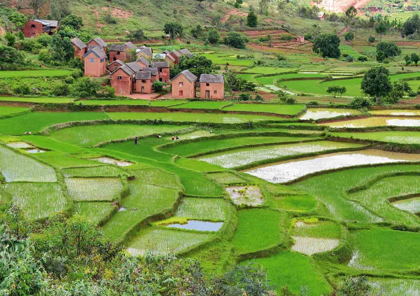 Wanderung durch Reisterrassen auf Madagaskar