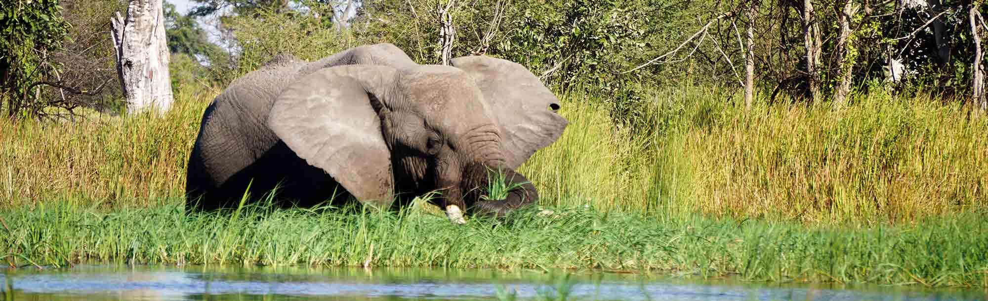 Elefant im Okawango-Delta