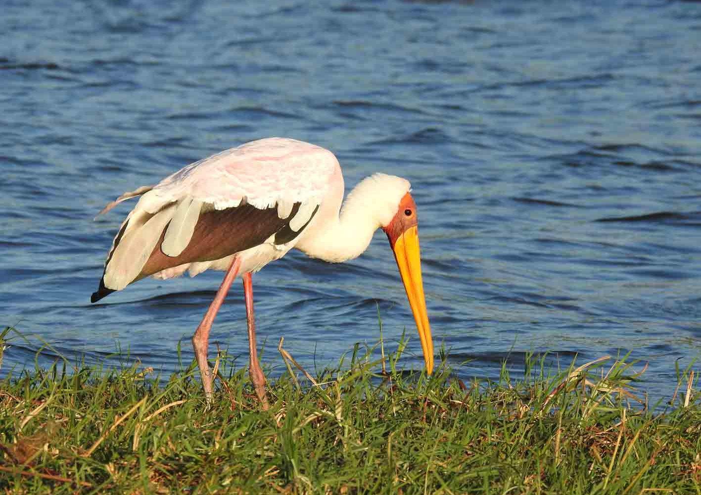 reiche Vogelwelt in Botswana