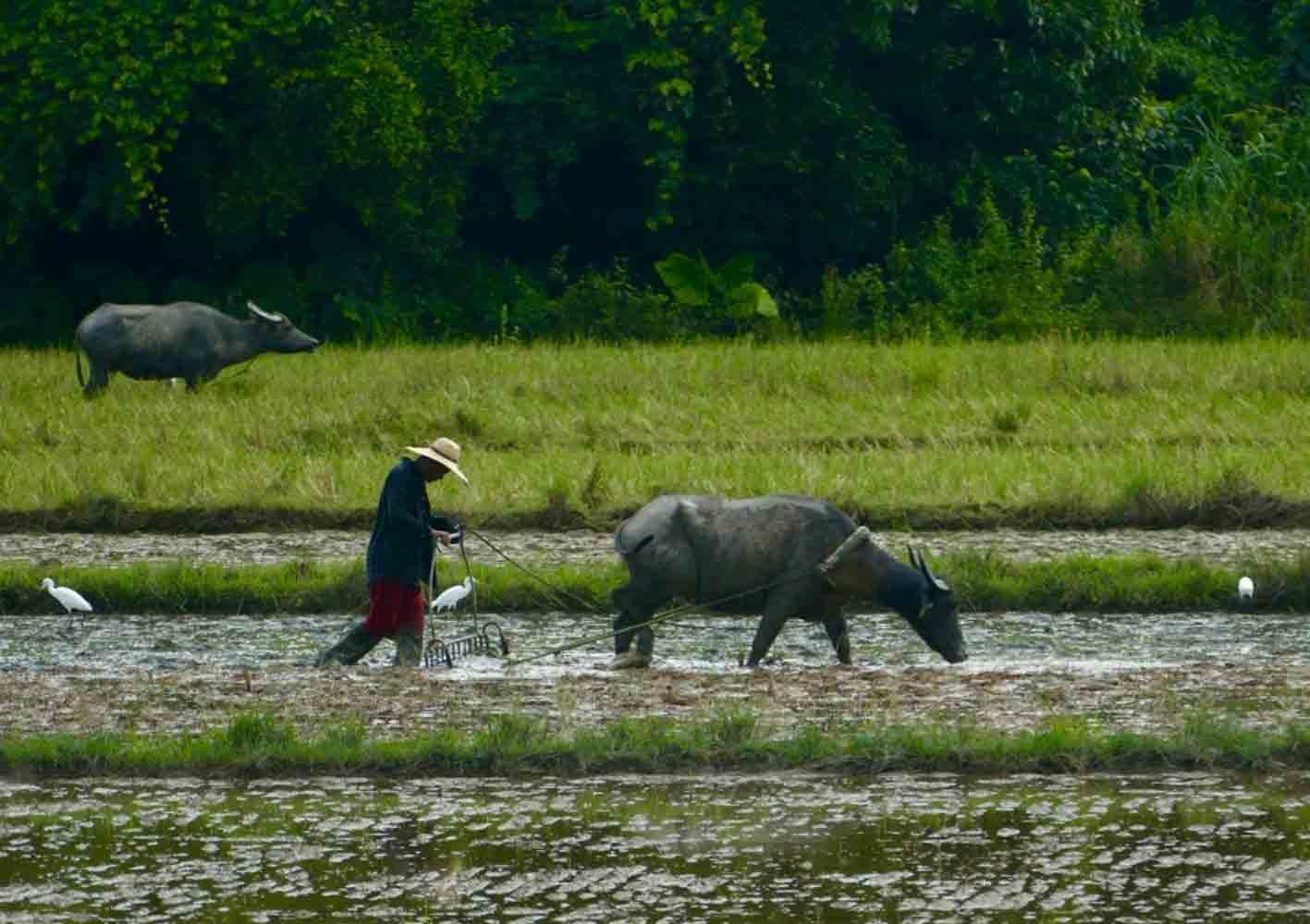 Feldarbeit, Palawan