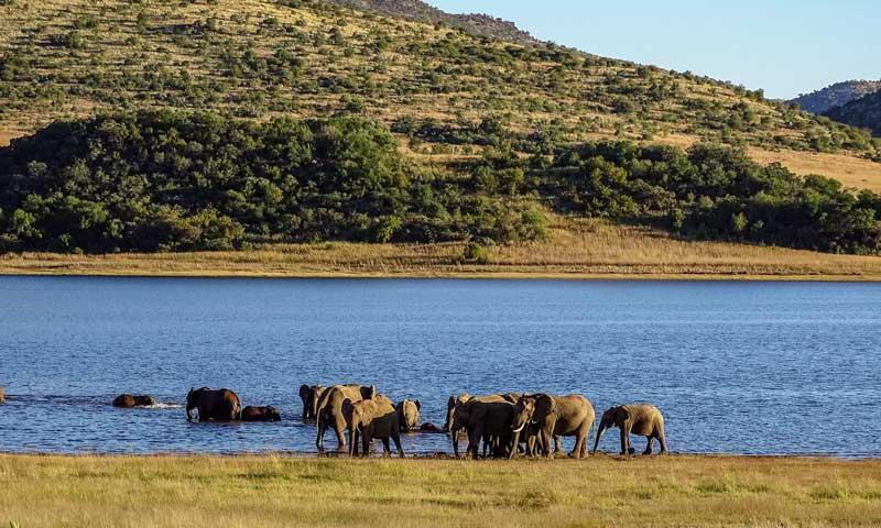 Elefantenherde am See, Pilanesberg-Nationalpark