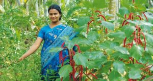 Botanik-Tour durch den Garten, Agastya Ayurveda Garden, Kerala, Südindien