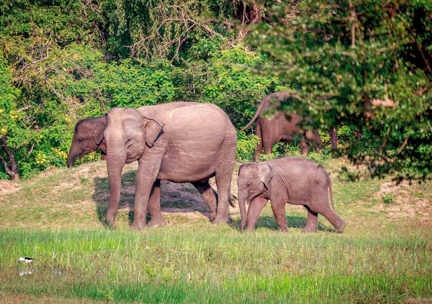 Wir erleben die Tierwelt Sri Lankas auf Safaris.