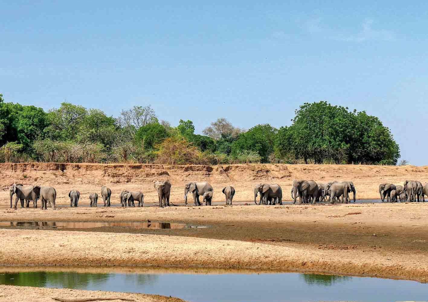 Manchmal können wir in Zambia ganze Elefanten-Herden beobachten.