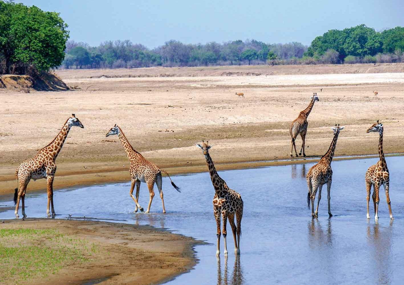 Rund um die Wasserlöcher treffen wir die meisten Tiere an, Zambia