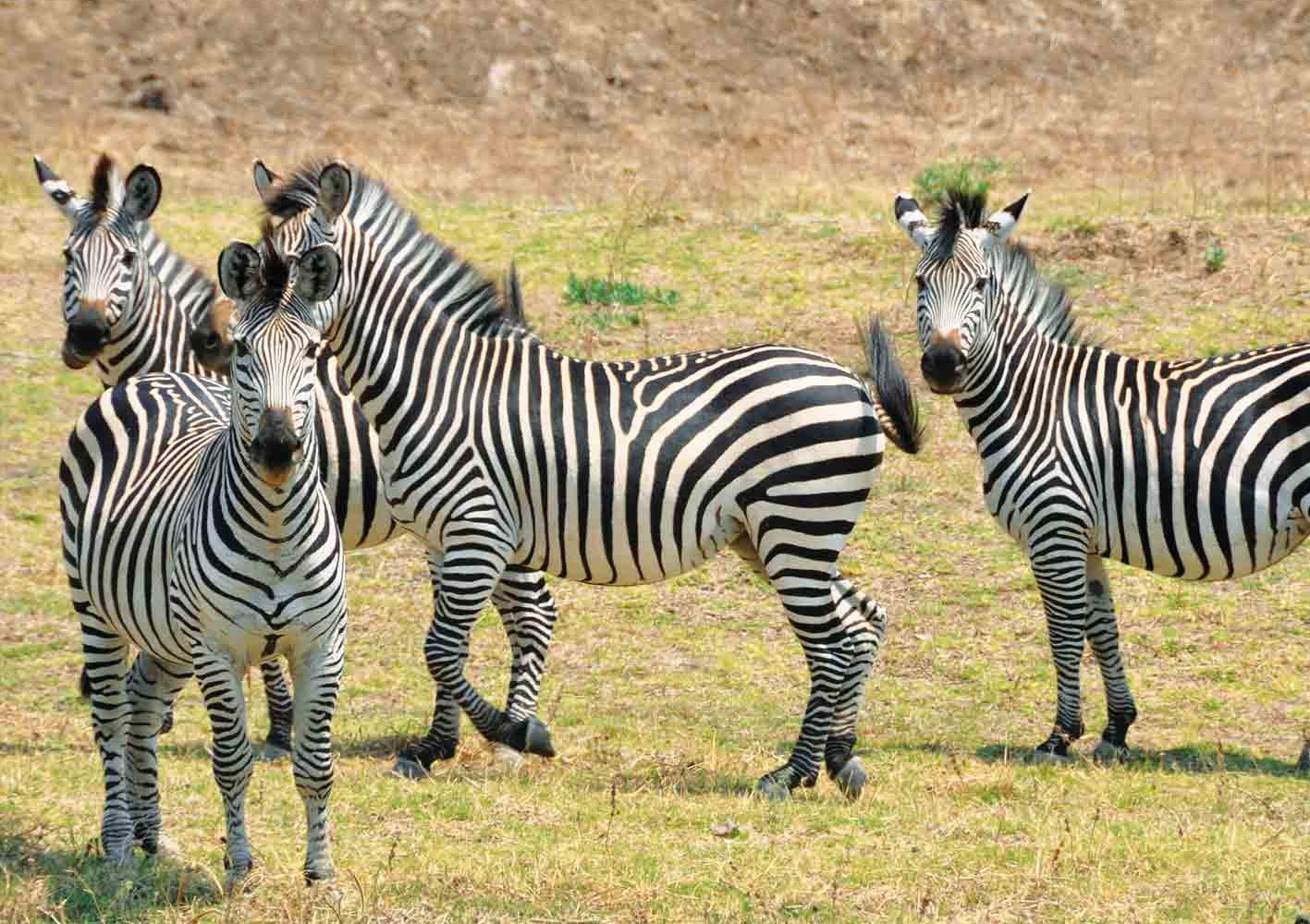 Wir nehmen uns in Zambia viel Zeit für Tierbeobachtungen.