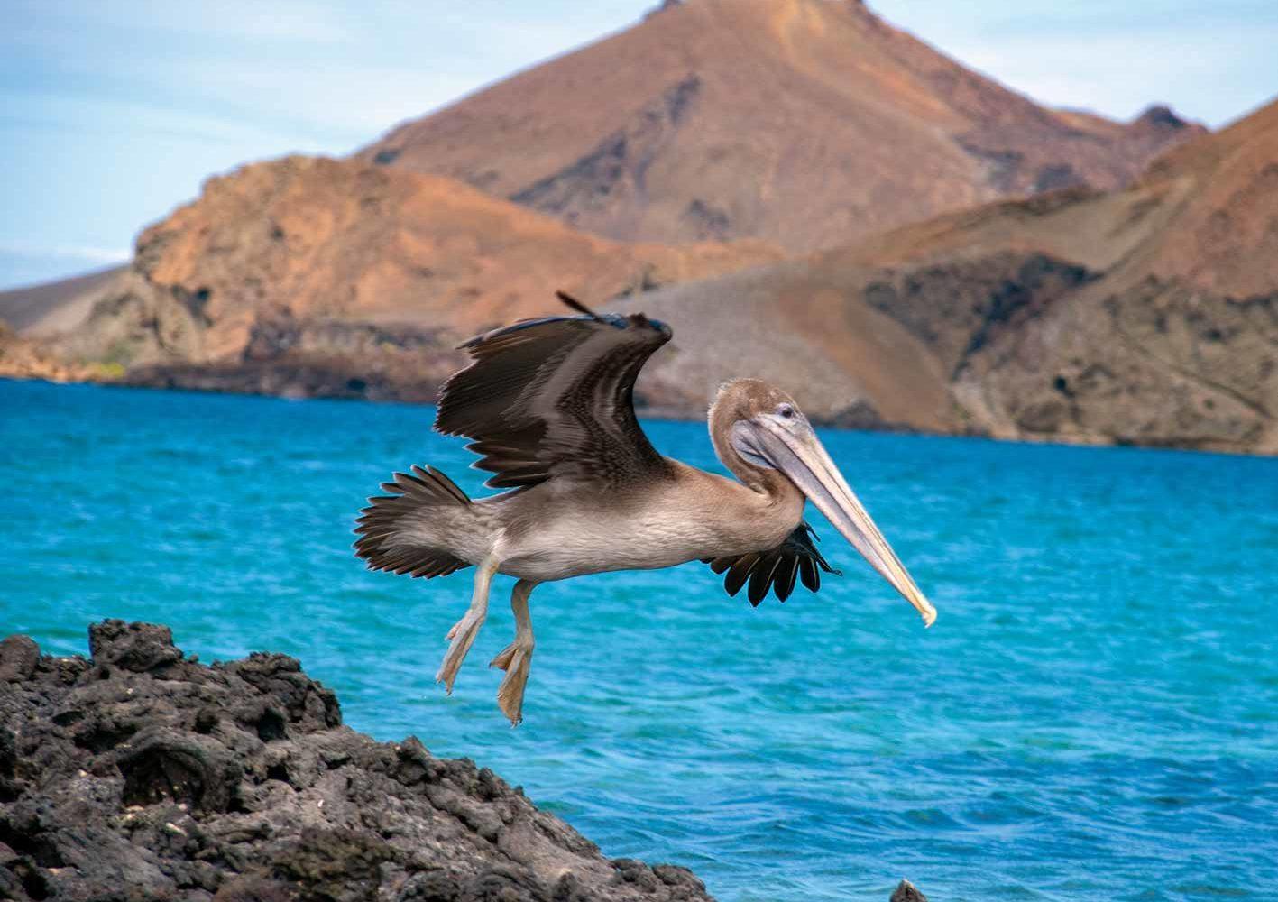 Die Landschaft auf Galápagos ist geprägt von Vulkanen.
