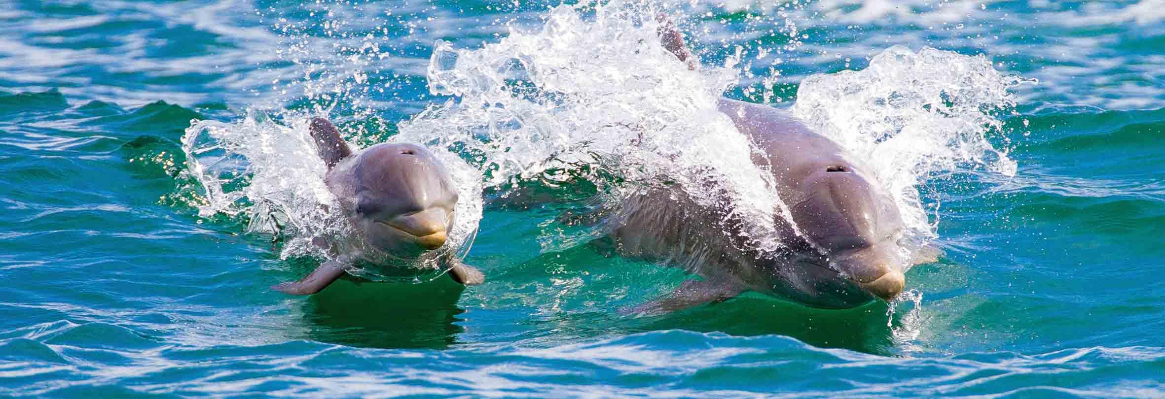 Delfine, Bocas del Toro, Panama