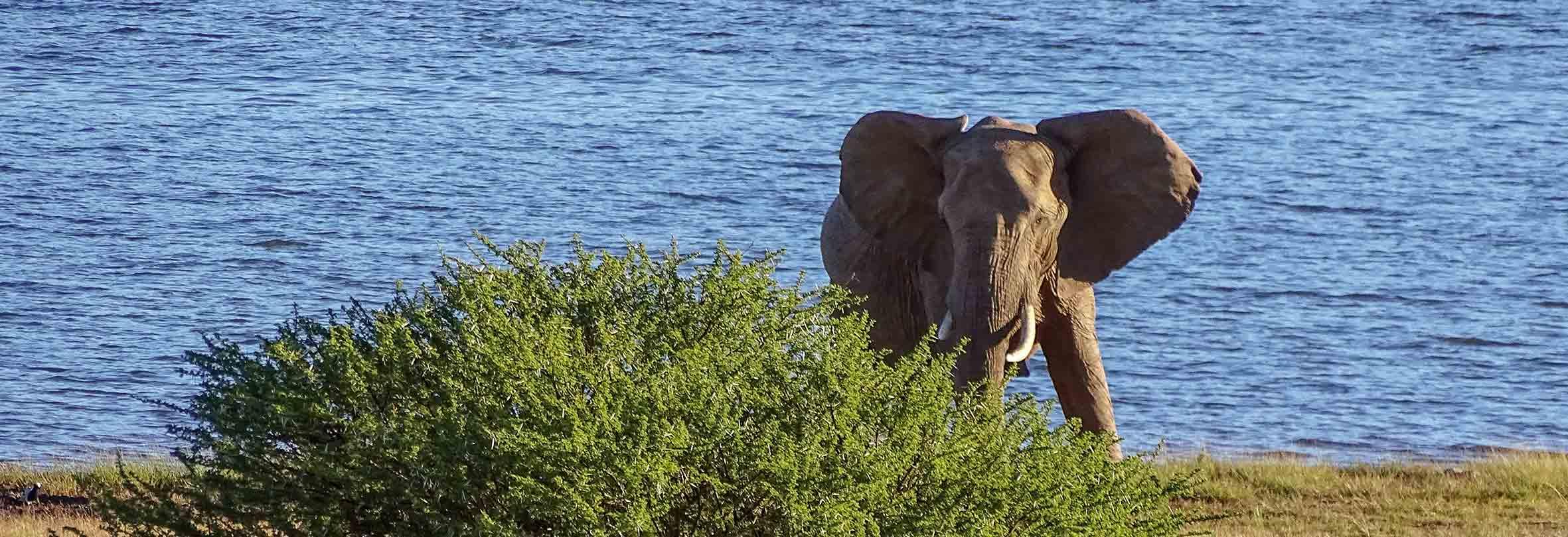 Elefant im Pilanesberg-Nationalpark, Südafrika