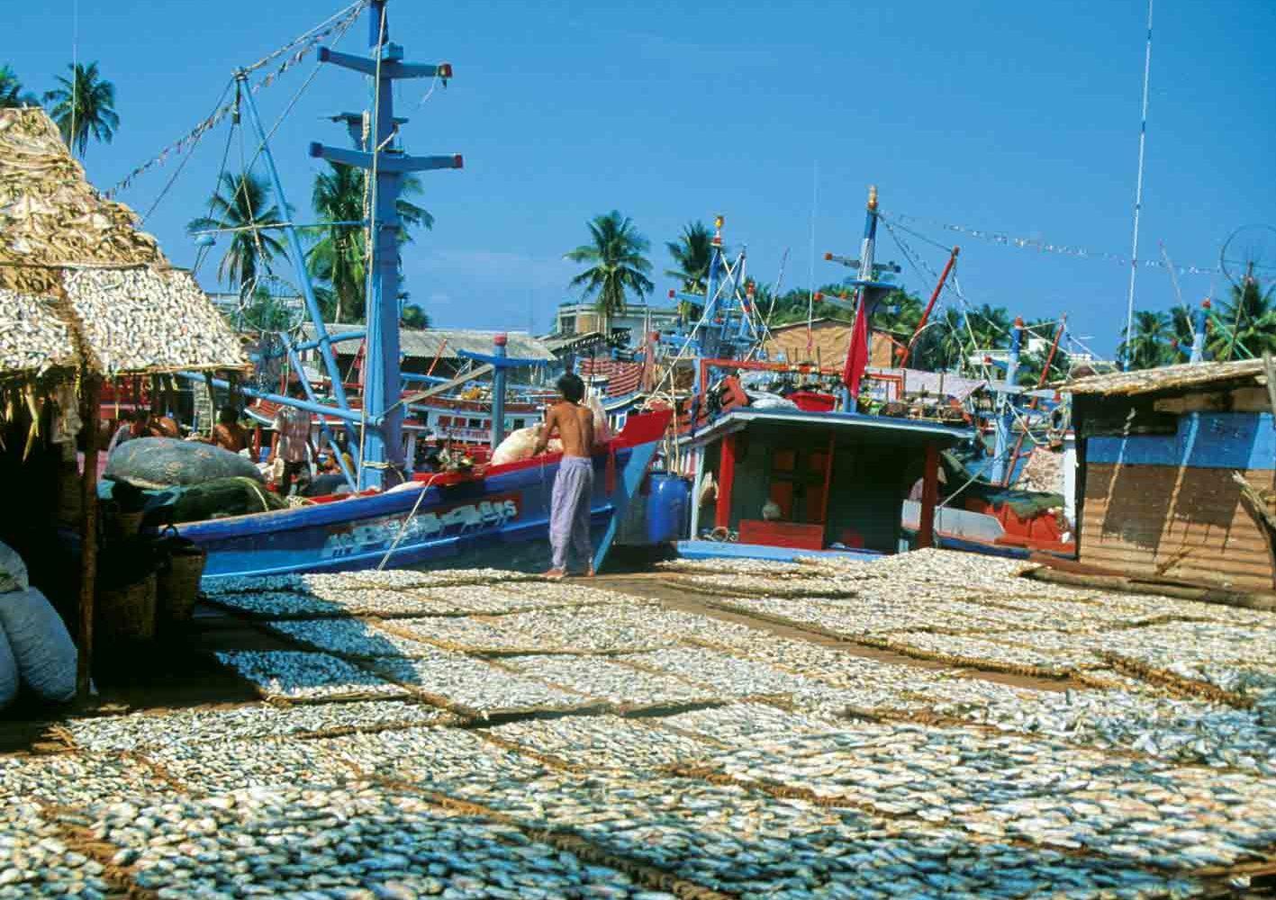 Fischtrocknerei auf der Tropeninsel Phu Quoc, Vietnam