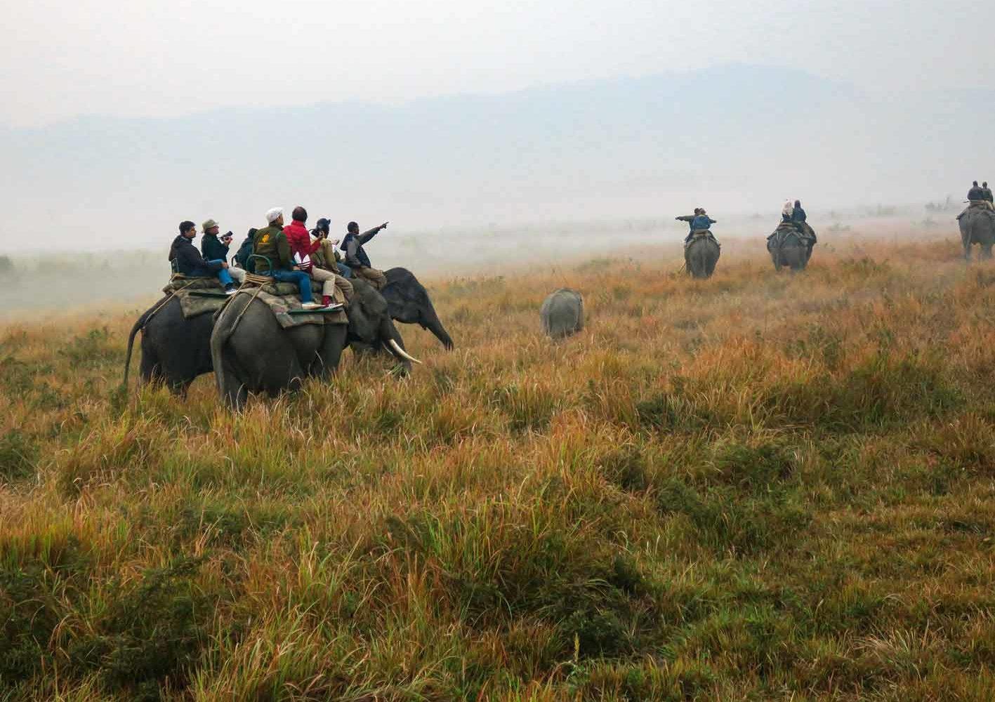 Auf der Elefanten-Safari im Kaziranga-Nationalpark sehen wir Panzernashörner.