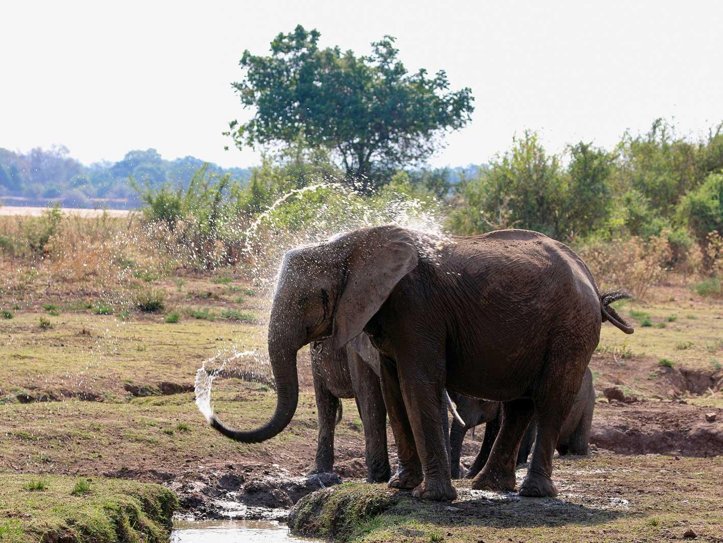 Elefanten, Zambia-Safari
