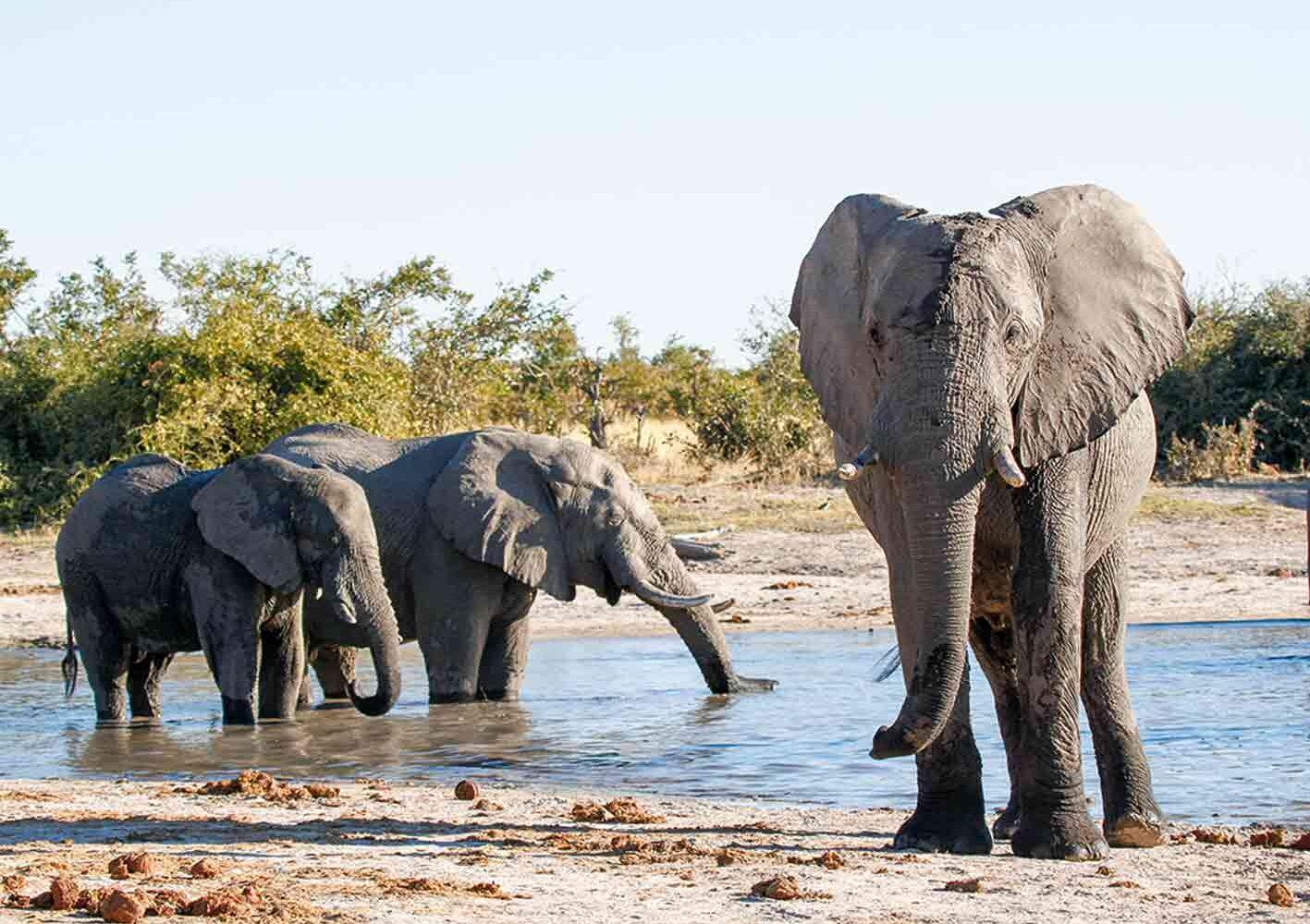 Elefantenherde im Savuti-Nationalpark